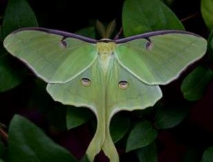 GEMINI NEW MOON, FIRE HORSE MONTH and SUMMER SOLSTICE