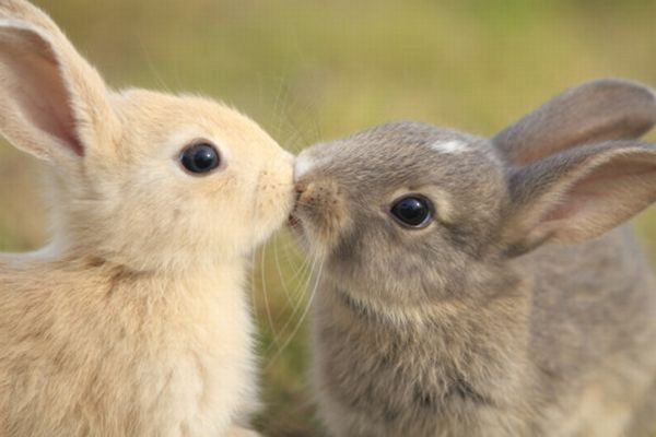 Rabbit guide to being a great lover